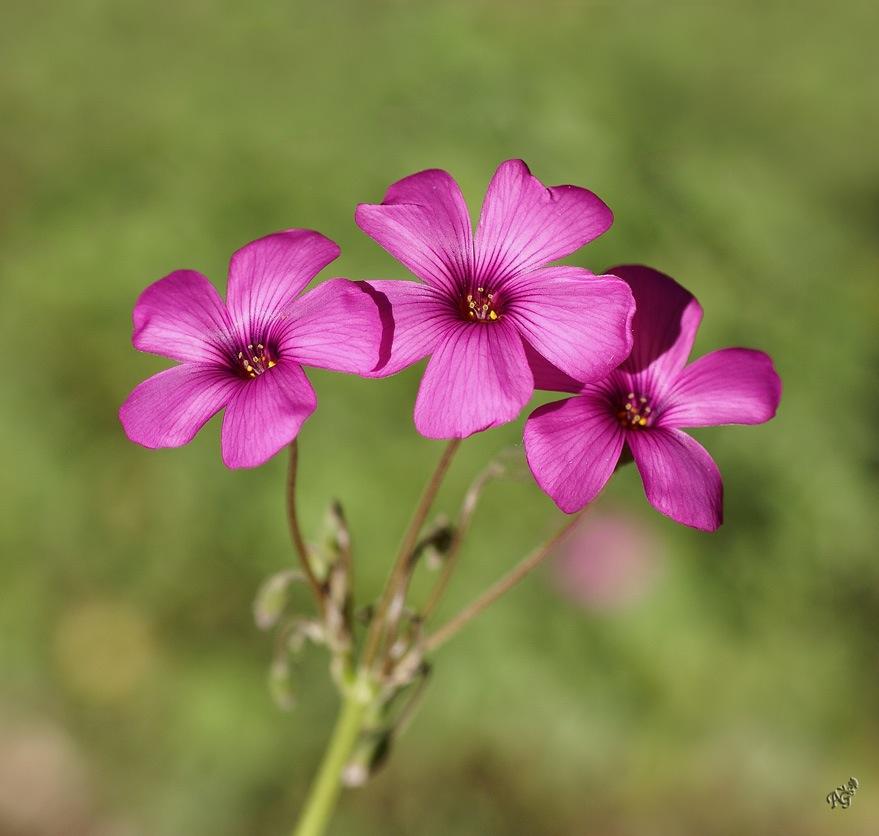 Le temps des fleurs ...