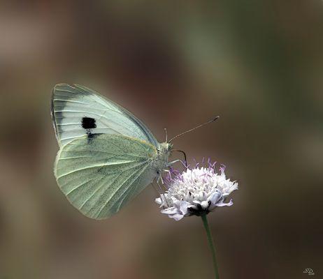 Le temps des papillons
