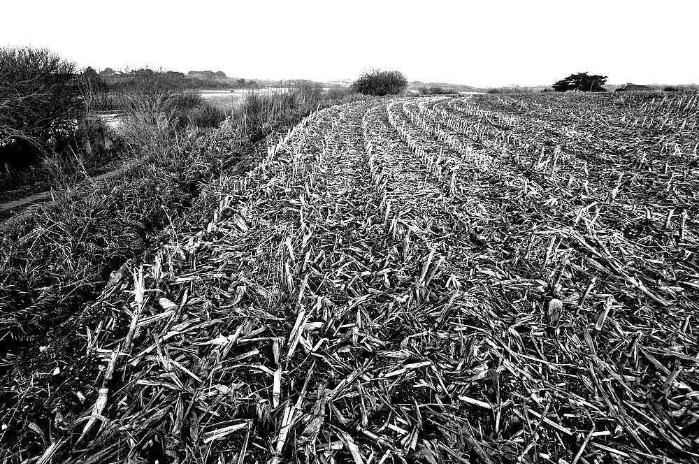 le temps est passé sur le maïs