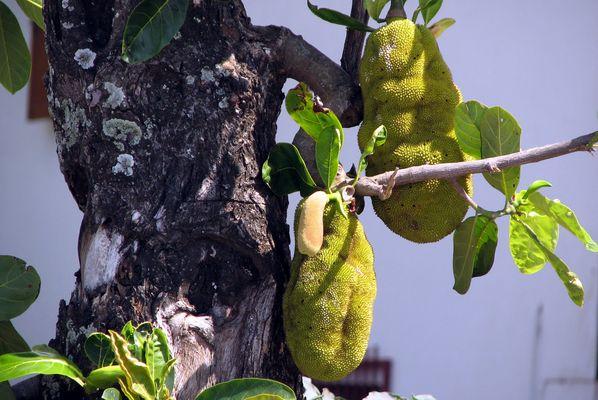 Le Ti Jacques sur son arbre perché