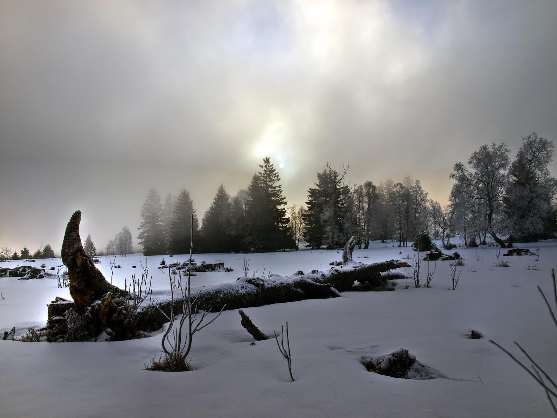 le tombé au matin mystique - Der Gefallene im mystischen Licht