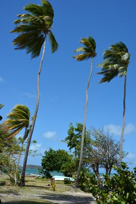 Le Vauclain Martinique