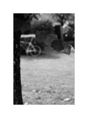 le vélo (1)