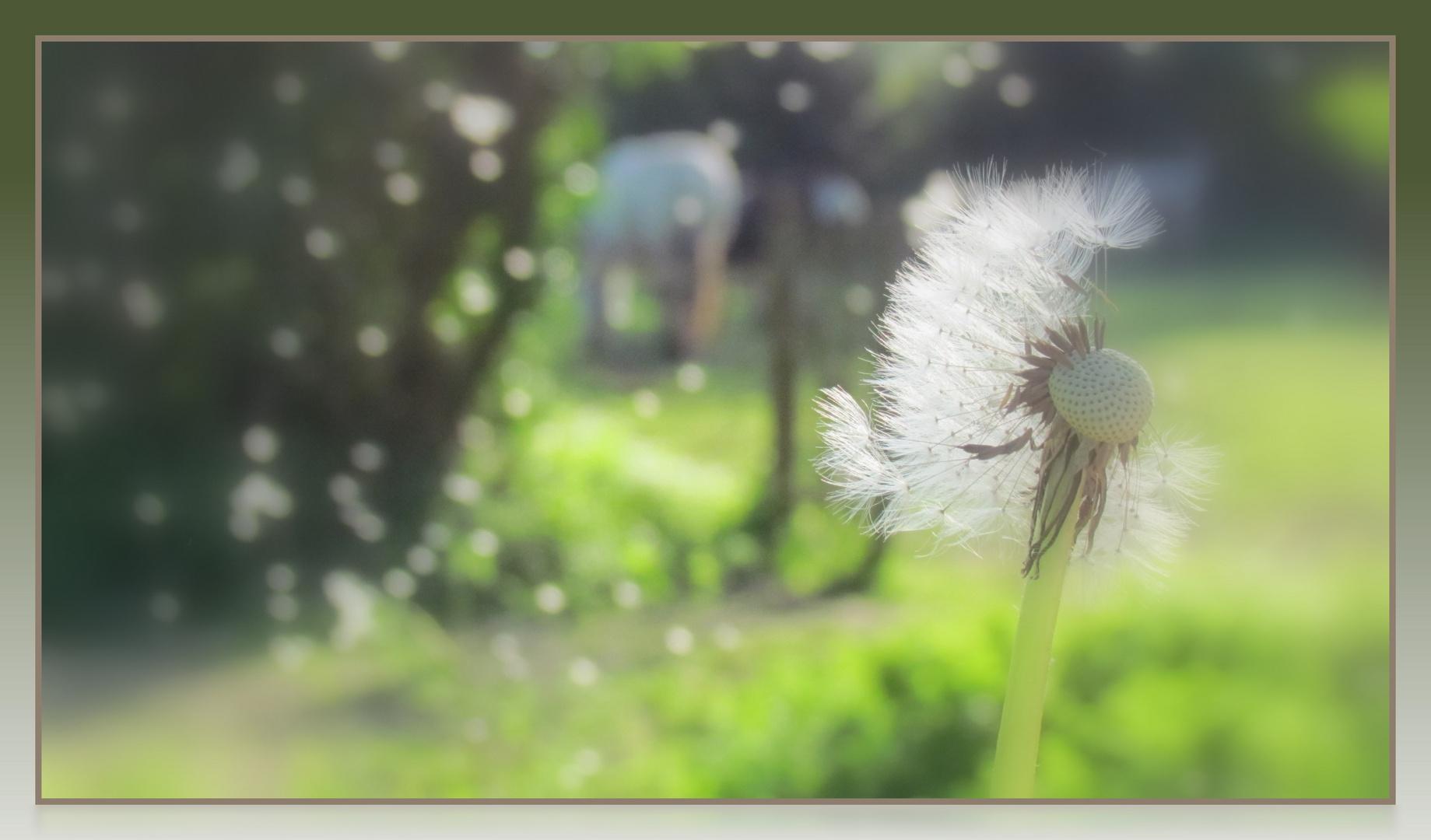 le vent l'emportera....................