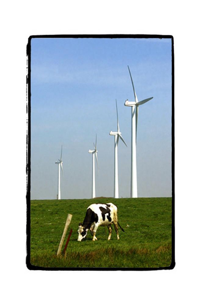 le vent source d'ecologie...
