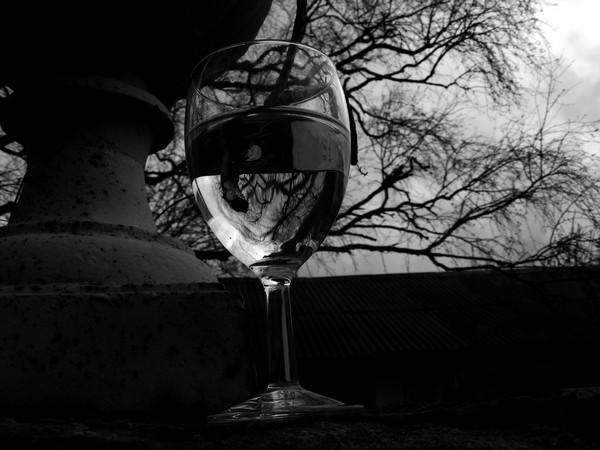 Le verre & l'arbre