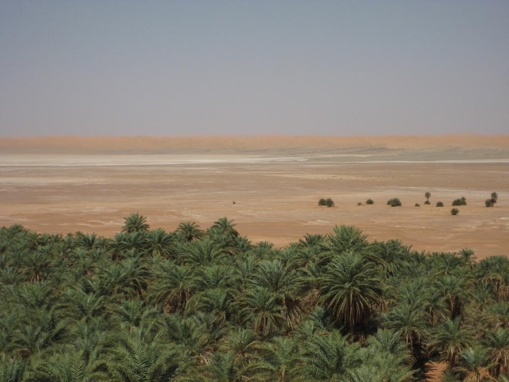 Le vert dans le desert