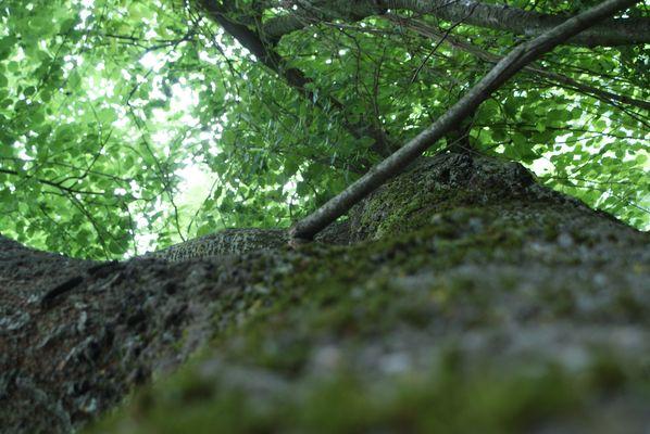 le vert feuillage