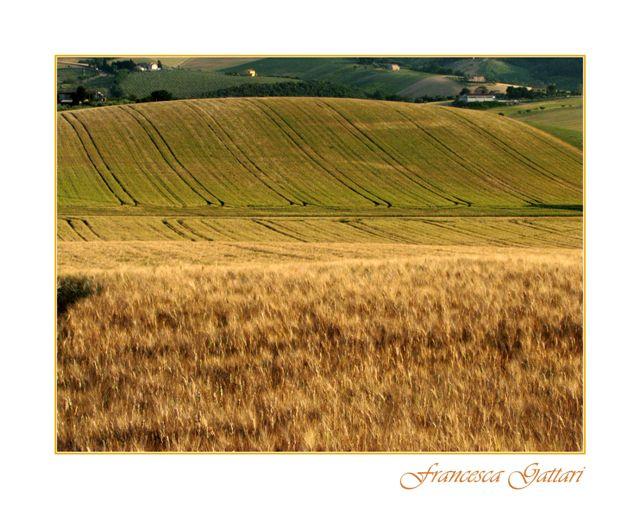 Le vie del grano