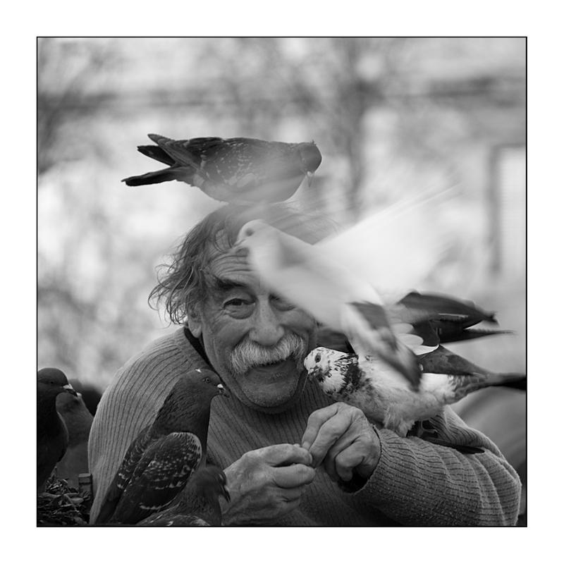 le vieil homme et les pigeons NB