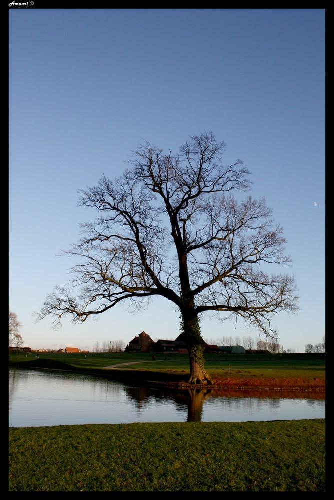 Le Vielle arbre & la lune.