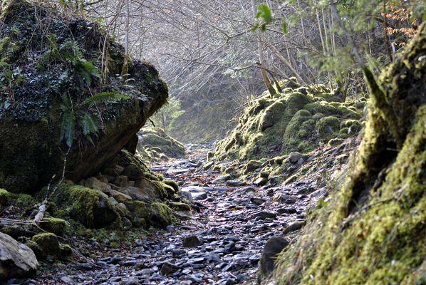 Le vieux sentier