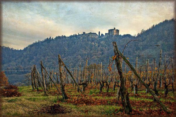 Le vigne della Rocca