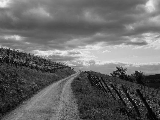Le vignoble d'Ingersheim