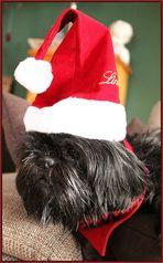 """""""Lea"""" der Weihnachtshund"""