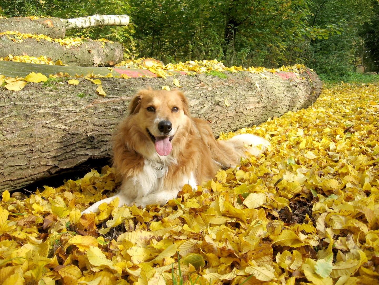 Lea im Herbstwald