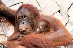 Lea und das Baby 1