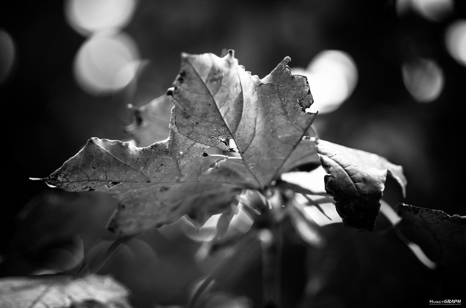 ...leaf...