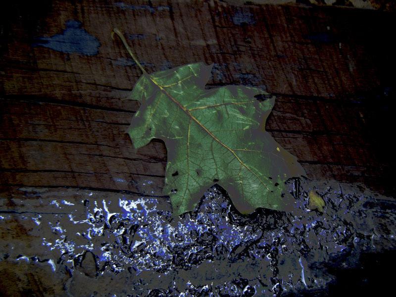 Leaf and tar