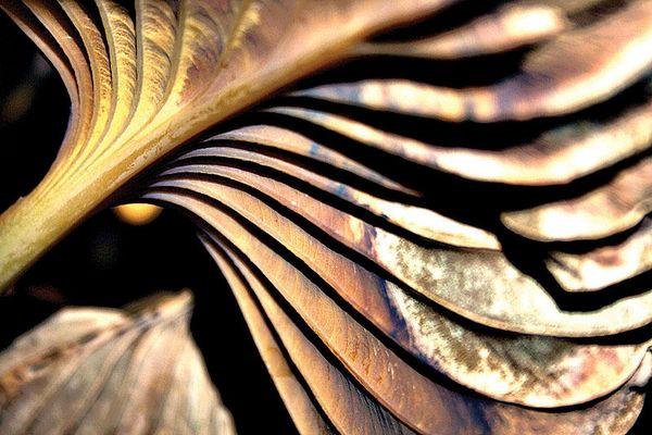 *leaf* art