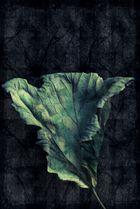 leaf dry #