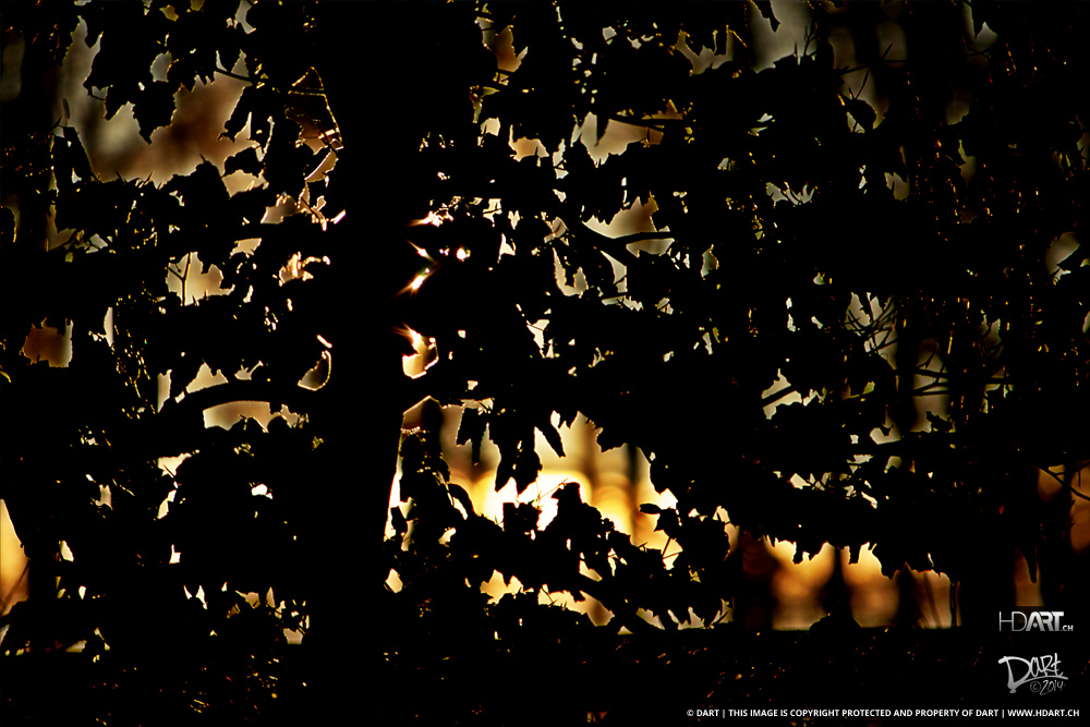 Leaf Fire