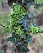 Leaf Impression