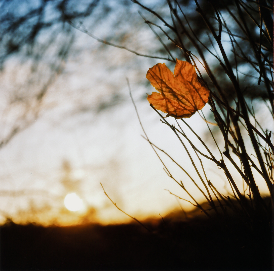 _leaf in leaving light