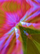 Leaf - Macro - Light....