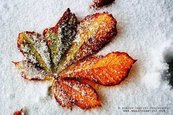 Leaf snow
