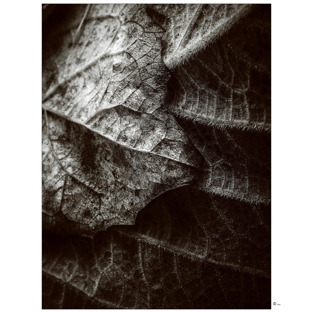 ~ leaf2leaf ~