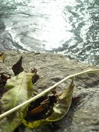 leafless sound