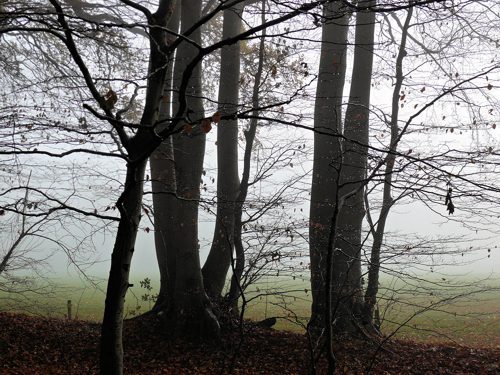 Leafless trees in a foggy november day