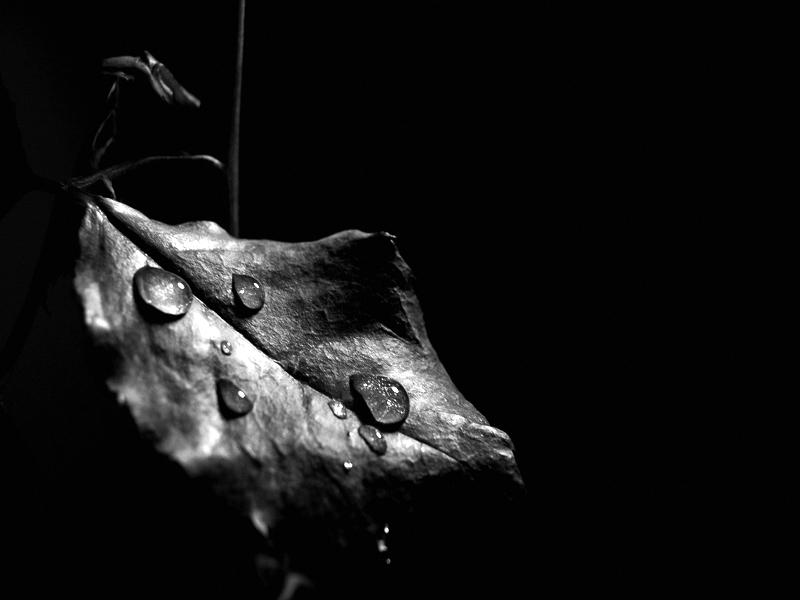 leaf's silent tear... lacrime silenziose