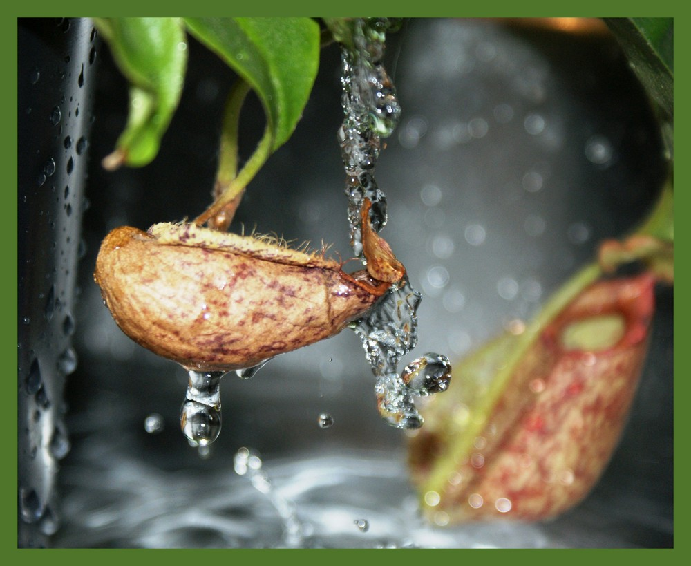 l'eau coule sur la fleur