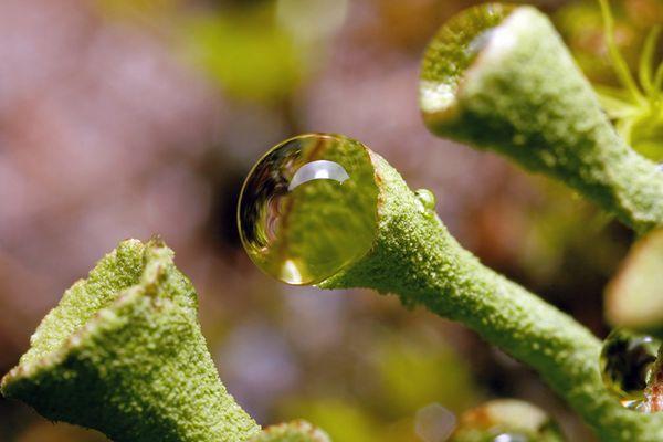 L'eau et le lichen