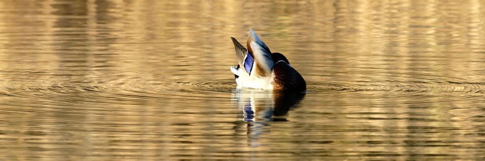 l'eau et l'oiseau