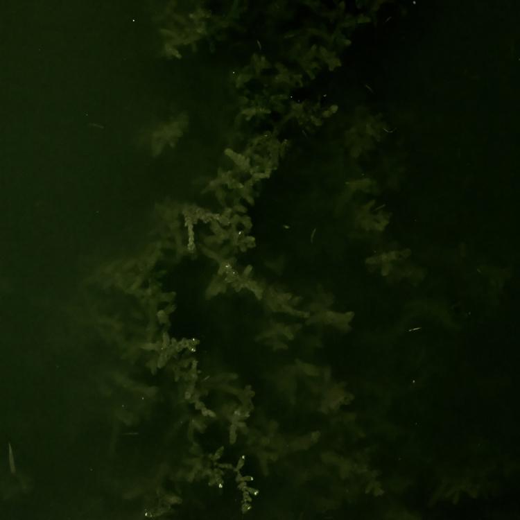 L'eau était verte... (2)
