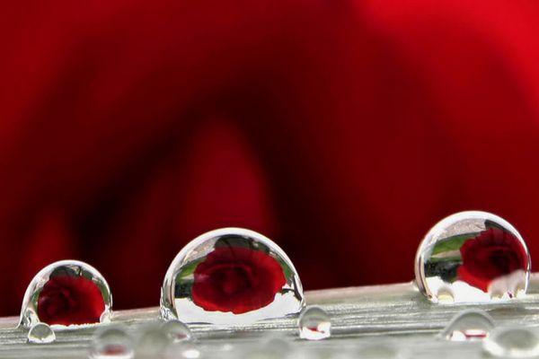 l'eau miroir