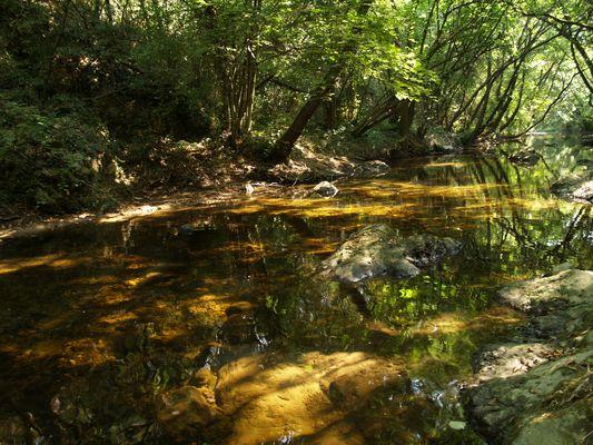 L'eau sous les frondaisons