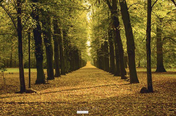 Leaves are fallin