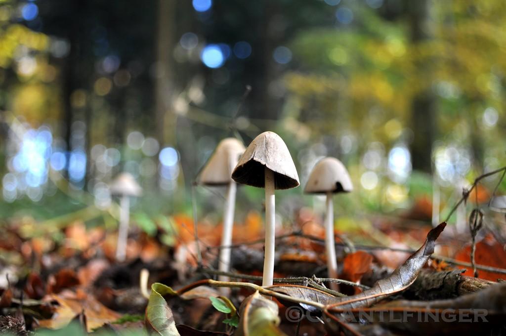 leaves & mushrooms