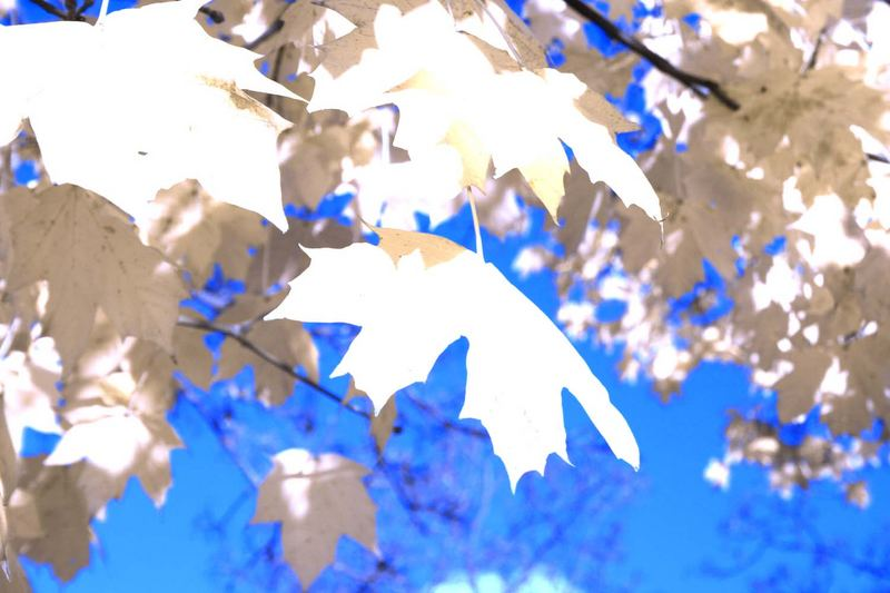 Leaves of automn