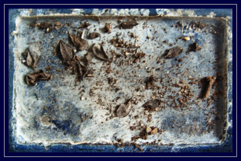 Leaves on a blue flagstone