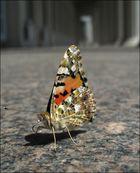 """""""Leben allein genügt nicht, sagte der Schmetterling, ..."""""""