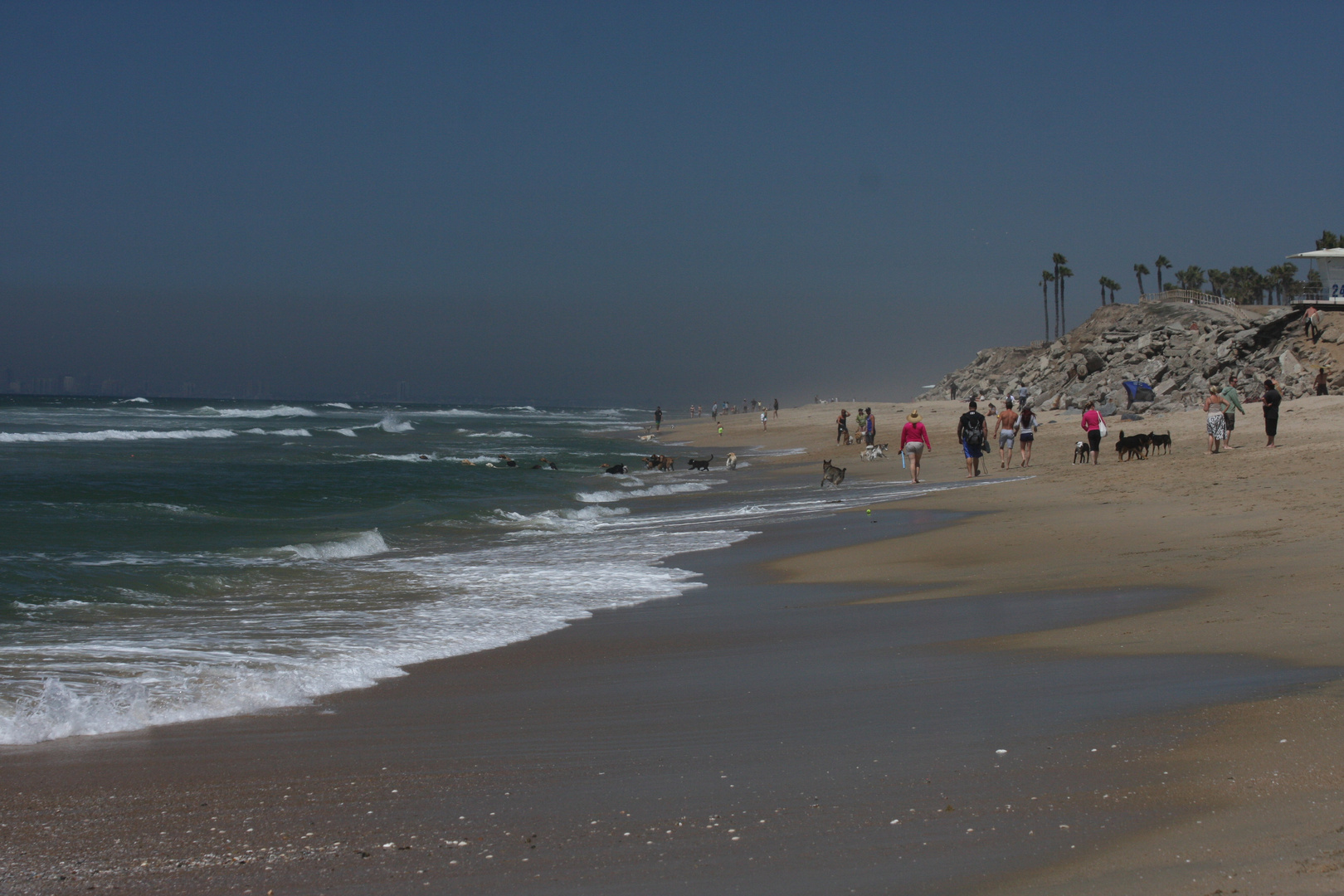 Leben am Strand