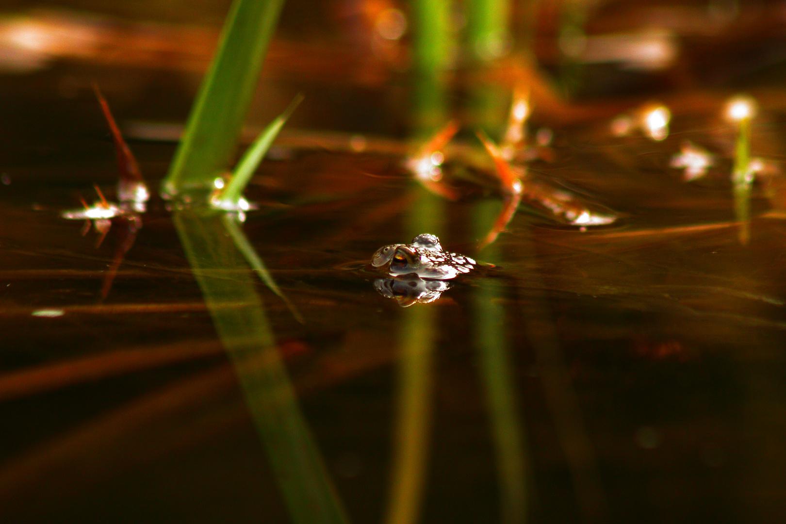 Leben am Teich