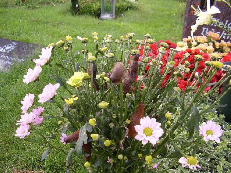 Leben auf dem Friedhof