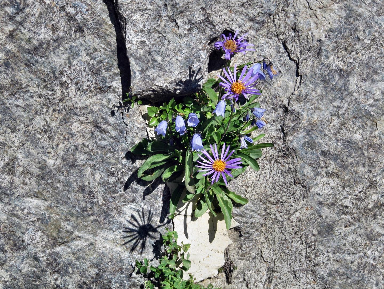 Leben aus der Felswand