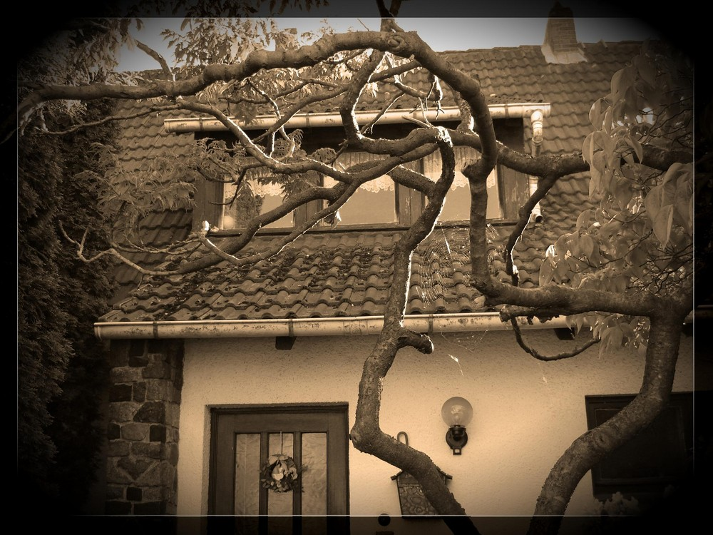 Leben-Baum-Haus